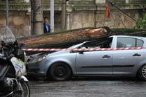 FOTOGALERIE: Un copac s-a prabusit peste o masina