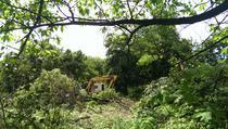 Copaci defrisati Parcul Tineretului 7