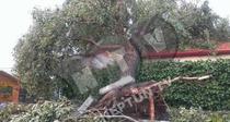 Furtuna puternica in Mangalia