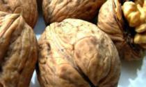 Nucile sunt bogate in proteine