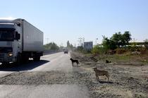 Caini, praf si gropi pe drumul (Centura Sud) spre mega-laserul de la Magurele