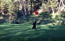 Un pui de urs se joaca pe un teren de golf