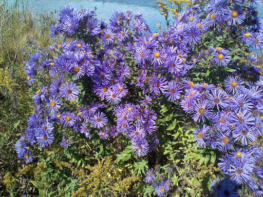 Flora spontana