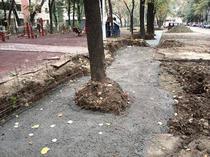 Betonare copaci
