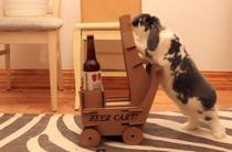 Beer bunny