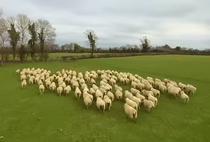 Turma de oi