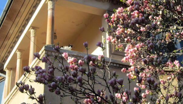 Spectacolul magnoliilor (2)