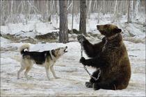 Ursoaica Masha