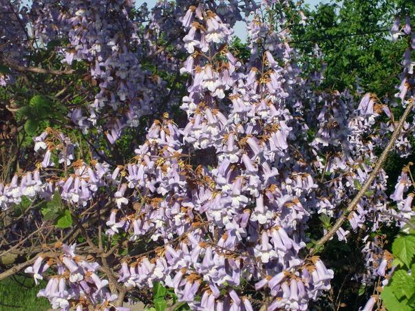 mii de flori de o frumusete rara