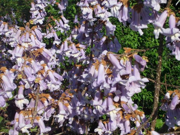 mii de flori de o frumusete rara (2)