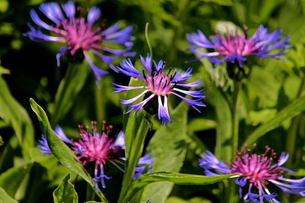 florile primaverii (2)