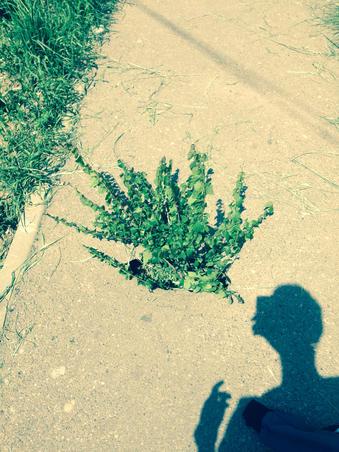 Copac in asfalt