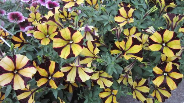 Flori de mai (2)