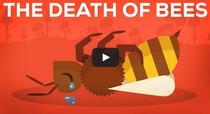 Importanta albinelor