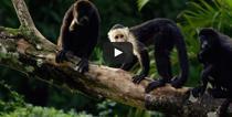 Maimute in bucatarie