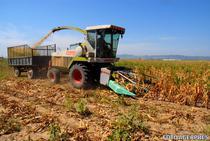 Culturi afectate de seceta