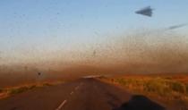 Invazie de lacuste uriase in sudul Rusiei