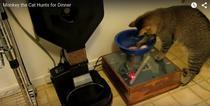 Sistemul de hrana pentru pisici creat de Benjamin Millam