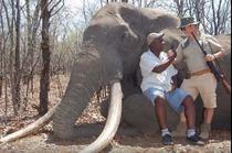 Elefant ucis in Zimbabwe