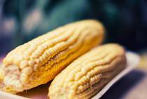 Beneficiile porumbului rezistent la seceta