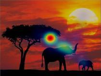Perceptie individ cu autism - imagine elefant