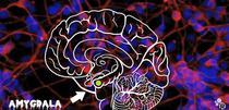 Ce se intampla in creierul unei persoane aflate in pericolul de dinaintea mortii