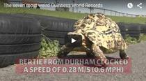 Cele mai bizare recorduri mondiale