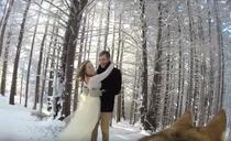 Nunta filmata de caine