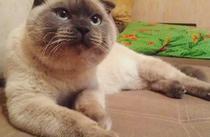 Pisica Barsik
