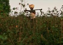 Sinuciderile din randul fermierilor, un fenomen larg raspandit in India