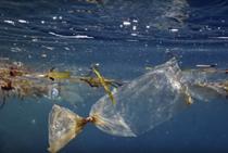 Oceanele lumii, sufocate de plastic