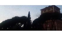 Autoritatile din Roma au inchis drumurile din cauza graurilor