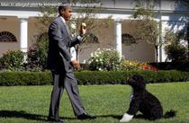 Obama si cainele pe care o persoana bizara a vrut sa-l rapeasca