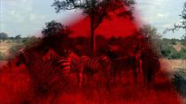 Greetings to the Ancestors, castigatorul Tiger Award 2015