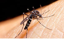 Virusul Zika