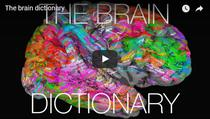 Cum arata harta semantica a creierului