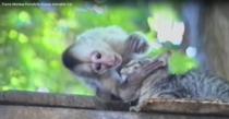 Maimuta si pisica