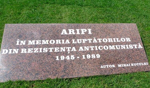 Aripi (3)