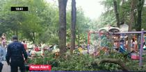 Creanga cazuta in Parcul Cismigiu