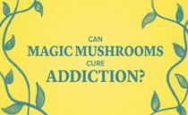 Ar putea ciupercile halucinogene sa ajute in lupta impotriva adictiei