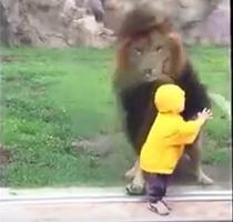 Leul si copilul