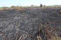 Parcul Natural Vacaresti dupa incendiu 2