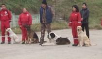 Campionatul mondial pentru cainii salvatori, la Craiova
