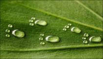 Cum puteti ajuta natura