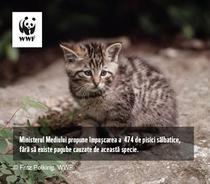 Pisica Salbatica - foto WWF - Fritz Polking