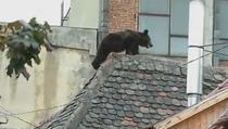Ursul de 176 de kilograme impuscat in Sibiu