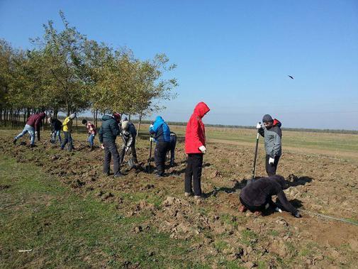 Plantare puietilor (1)