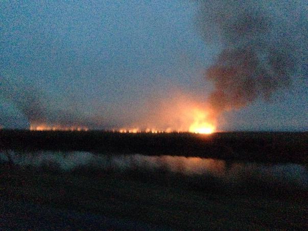 Arderea stufului in Delta Dunarii