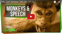 De ce nu pot maimutele sa vorbeasca precum oamenii