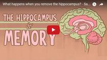 Cum poate trai o persoana fara hipocamp